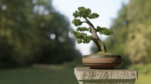Bonsai - andrea cilia